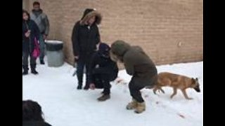 Hundreds Show Up at Animal Shelter to Spend Christmas Day With Homeless Pets