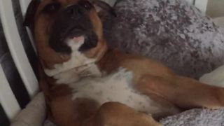 Rescue dog now lives the good life - Video