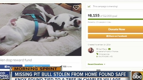 Missing pitbull stolen from home found safe