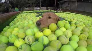 Dog Lovers Gather Tennis Balls to Honor Deceased Pup - Video
