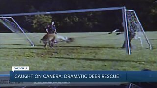Police rescue trapped deer in Bingham Farms