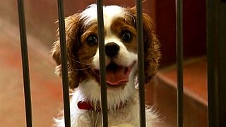 1 Million Dog Meals Needed! - Video
