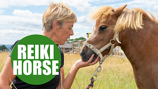 A faith healer performing Reiki on HORSES - Video