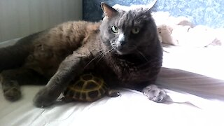 Pet turtle cuddles with kitty best friend