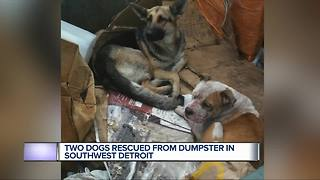 Two dogs rescued from dumpster in southwest Detroit