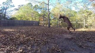 This dog failed spectacularly trying to catch a ball!