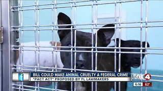 New animal abuse bill for tougher laws