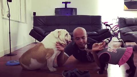 Human gets destroyed breaking up dog fight