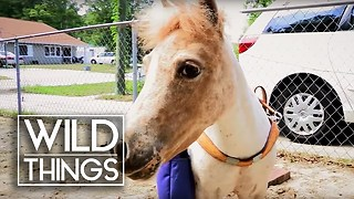 The Guide Pony For Blind People | Wild Things - Video