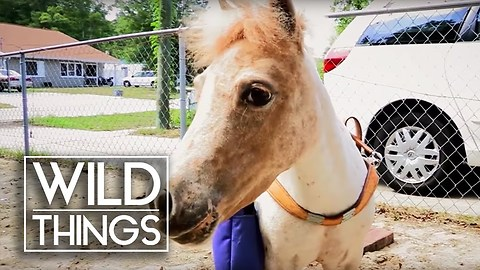 The Guide Pony For Blind People | Wild Things
