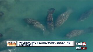 Boating-related Manatee Deaths