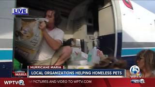 Local organizations helping homeless pets in Puerto Rico - Video