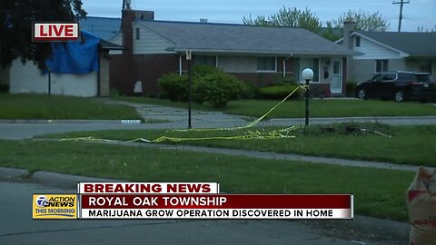 Marijuana grow operation discovered in Royal Oak Township home