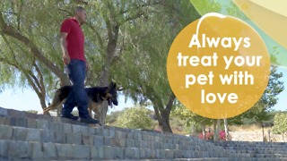 Teach your four legged friend to sit - Video