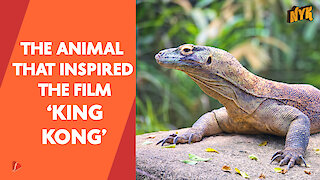 What Do You Know About Komodo Dragons? *