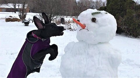 Great Dane puppy makes it impossible to build a snowman