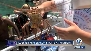 Florida's sport lobster season begins - Video