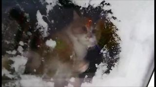 Cat hilariously attempts to clear window of snow