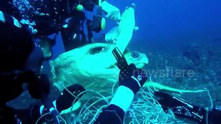 Divers rescue turtle trapped in net - Video