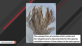 Scientists Discover New Deep-Water Coral