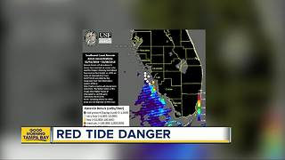 Red tide bloom persists along Florida's west coast - Video