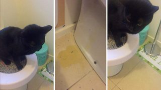 Kitty litter! Hilarious footage shows cat trying to wee in toilet but missing