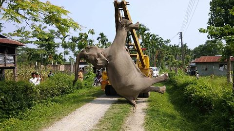 Farmer's reckless solution to keep wild animals away kills endangered elephant in India
