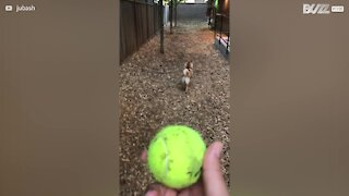 Dog doesn't like to play fetch