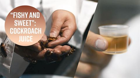 Cockroach juice: Your new health drink?
