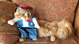 Funny Cat Models Sheriff Halloween Costume - Video
