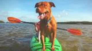 St. Petersburg Florida Doggie Cam - Video