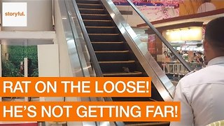 Runaway Rat Races Up Escalator at Shopping Mall - Video