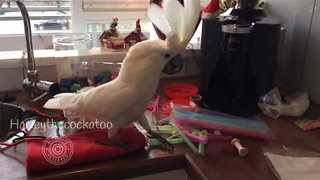 Constructive Cockatoo Helps With Handmade Christmas Gifts - Video
