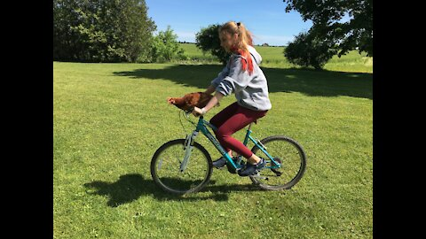 One-of-a-kind chicken loves to join owner for bike rides