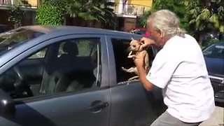 Chihuahua rescued from extremely hot car - Video