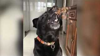 Fast Dog Catches Flying Food in Super Slo-Mo - Video