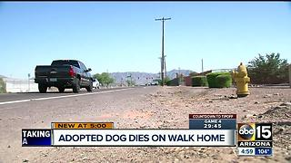 Newly adopted dog dies after walking home in hot temperatures - Video