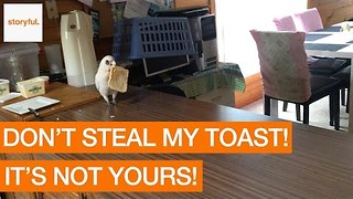 Cunning Cockatoo Shamelessly Steals Freshly Buttered Toast From Kitchen - Video