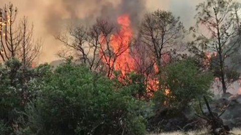 Fire Crews Battle Fast-Moving Detwiler Fire in Mariposa County