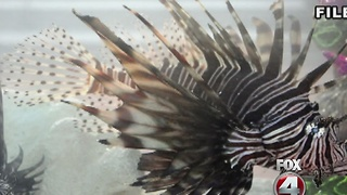 Lionfish killing celebration - Video