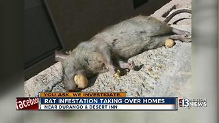 Las Vegas families found rat with Cap'n Crunch in mouth - Video