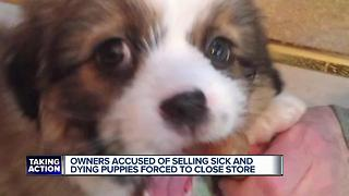 Mount Clemens pet store closing after being accused of selling sick dogs - Video