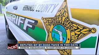 Second dog attack on a Hernando deputy within days - Video