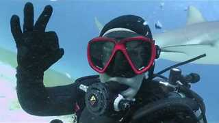 Diver Encounters Big Sea Creatures on Different Trips - Video
