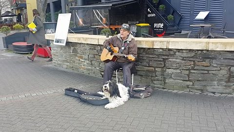 Simon and Barkfunkel: Brilliant busking duo sees man and dog harmonise together in barking mad performance