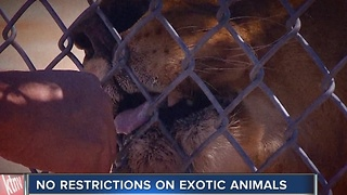 CONTACT 13: Nevada law allows for dangerous,exotic animals - Video