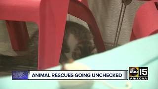 Animal Control officials say regulation needed for rescue facilities - Video