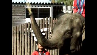Bean Throwing Elephants - Video