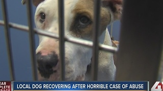 Local dog recovering after horrible case of abuse - Video