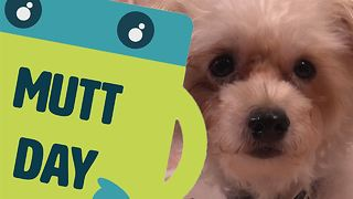 Name The Day: Mutt Day - Video